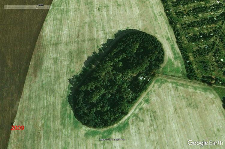 lisy-drzewa